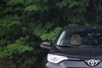 本田要慌了!丰田新车跌破17万,外观比锐界漂亮,配2.0L+CVT