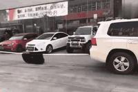"""两辆汽车暴力""""拔河""""听到变速箱一声响, 途乐车肠子都悔青了"""