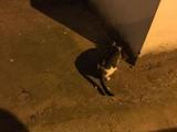 铲屎的,你又背着我在外面偷别的猫