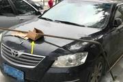 你见过乱停车被整的最惨一次是什么样子?