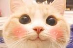 才知道手机上小萌猫表情包叫bobi,世上怎么会有这么可爱的猫!图片