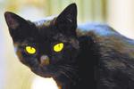 实拍两只猫咪打架 黑猫惨遭胖揍 小黑猫的表情亮了