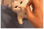 猫咪拍照一副很凶的表情,每次天生都像欠它团长干一样,哈哈笑喷表情荒我们小鱼包古呢图片