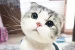 我累了猫咪表情包分享展示图片
