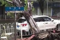 台风天力扛巨树是偶然?看长安新CS75安全表现,五星成绩获点赞