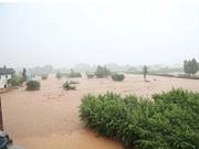 暴雨致广东连平县两镇通讯中断 5万人受灾(图)
