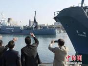日本32年科研捕鲸史落幕 7月将重启商业捕鲸