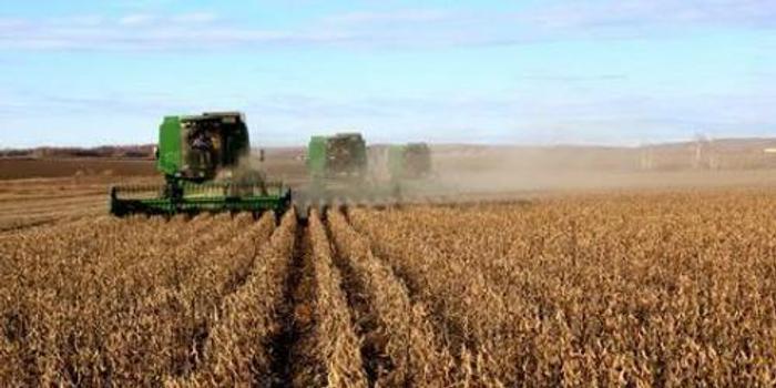 农业农村部:预计今年全国大豆播种面积超过1.3亿亩
