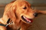 狗子龇牙咧嘴吓客人,主人抬手就是一巴掌,狗狗的表情太搞笑了!图片