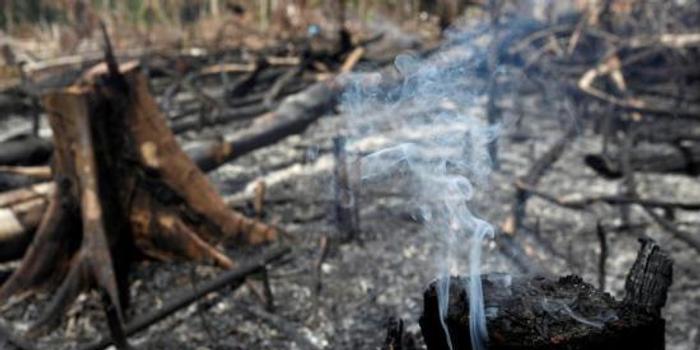 """""""地球之肺""""浓烟笼罩 联合国吁保护亚马孙雨林"""