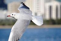 国泰君安:A股国际化再下一城 一生一次机会指向何处?