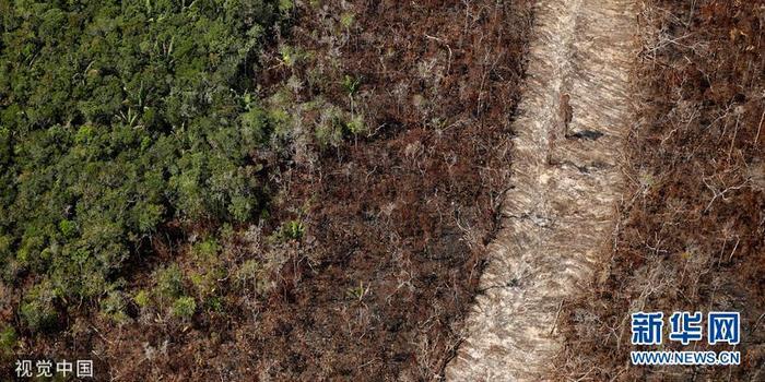 巴西亚马孙雨林大火持续 航拍被烧毁的林地(图)
