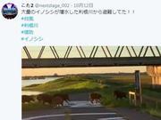 日本野猪台风天一路狂奔 为生存而战感动网友(图)
