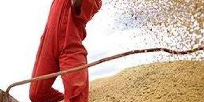 美农收获季前 中国增购巴西大豆