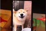 骚男偶遇同行,这个狗子和骚男谁更骚?网友:绝佳表情包图片