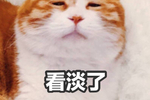 那些可爱的猫咪表情包之人家要亲亲图片