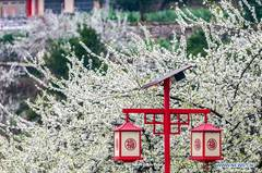 In pics: spring scenery in China