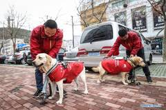 Pic story: guide dog training center in Dalian, NE China