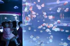 People visit Zuohai Marine World in Fuzhou, Fujian