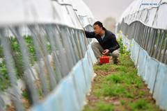 Agriculture company offers job opportunities to villagers in Gansu