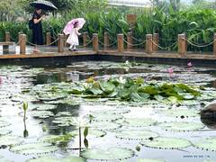 Scenery of Nakao River wetland park in Nanning
