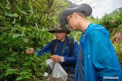 Experts investigate biodiversity in Longquan City, Zhejiang