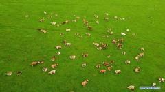 Scenery of Wulanmaodu pasture in Inner Mongolia