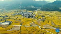 Scenery of paddy fields in Longli County, Guizhou
