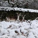 """欧洲多地降大雪 动物们""""撒欢"""""""