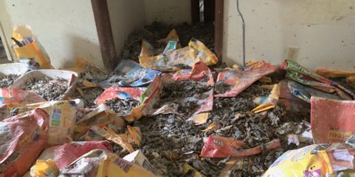 美国男子涉嫌虐待300只猫 冰箱塞满猫尸体