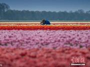 耗资20万欧元改名尼德兰 荷兰为何要改名?