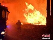 澳大利亚悉尼被野火包围 300只动物急撤近郊园区