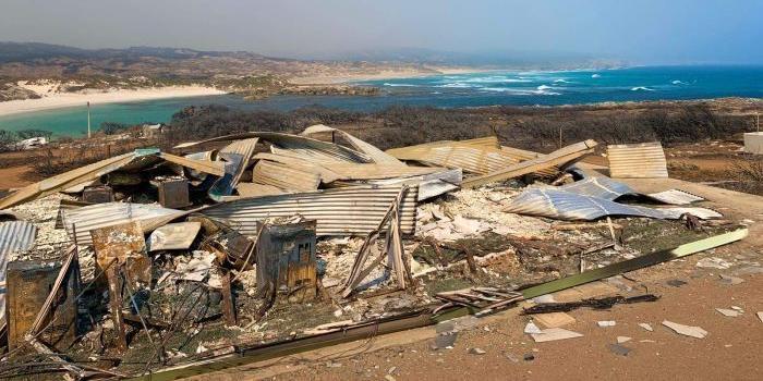 澳大利亚袋鼠岛损失惨重 生态环境遭受严重破坏