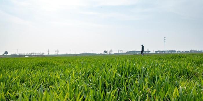国土空间规划专项立法启动 土地、城乡规划将成历史