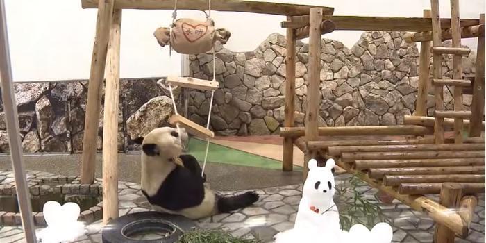 """旅日大熊猫收到情人节礼物 还有5份""""告白""""(图)"""