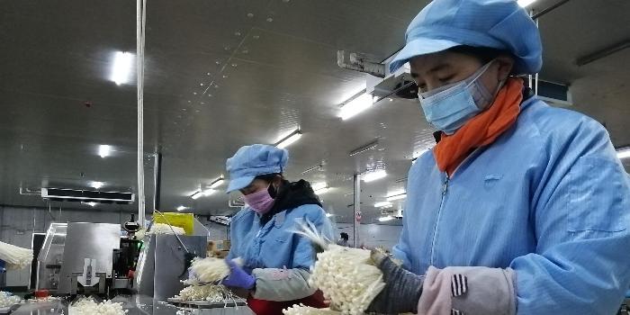 【记者走基层】河北临西县:从严从细抓防疫 有序复工保生产