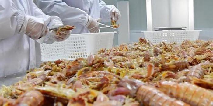 海鲜价格下探:帝王蟹甩卖 盒马称与海鲜企业共抗风险