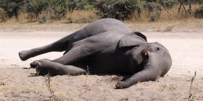 """数百头大象离奇死亡!非洲""""大象王国""""发生了什么?"""