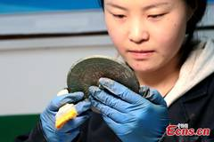 More than 80 bronze mirrors of Han Dynasty unearthed in Shaanxi