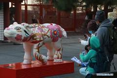 11 ox sculptures displayed in San Francisco, U.S.