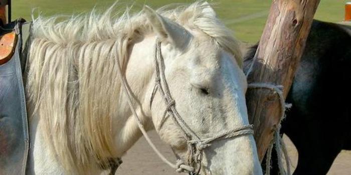馬為什么站著睡覺?