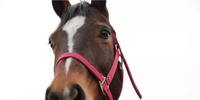 告诉你一个练习骑座缰绳控马的方法
