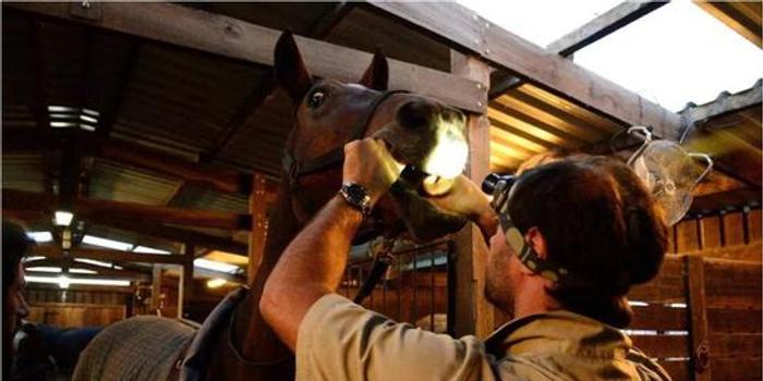关于马匹牙齿的基础保健