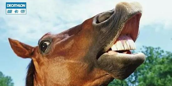 没想到你是这样的马!——它的表情你懂吗?