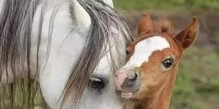 馬上學英語|馬匹不同年齡的稱呼