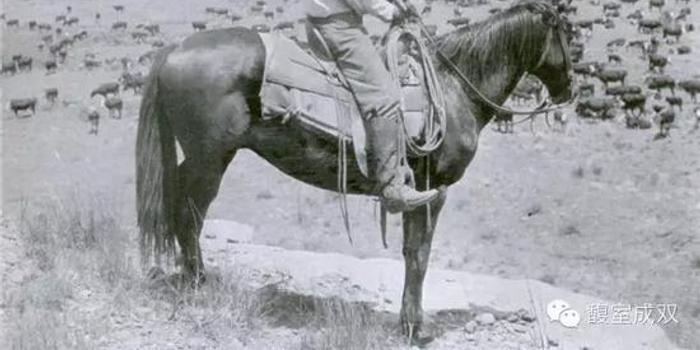 牛仔的疯狂:美国西部骑术
