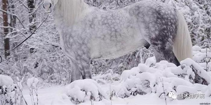 带你走近世界上脚步最轻盈的马
