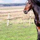 不同性别、年龄的马有多少种称呼?让华天告诉你答案