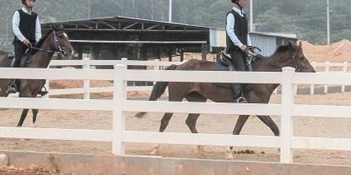 龙江马术特色小镇列入福建省体育产业开工项目