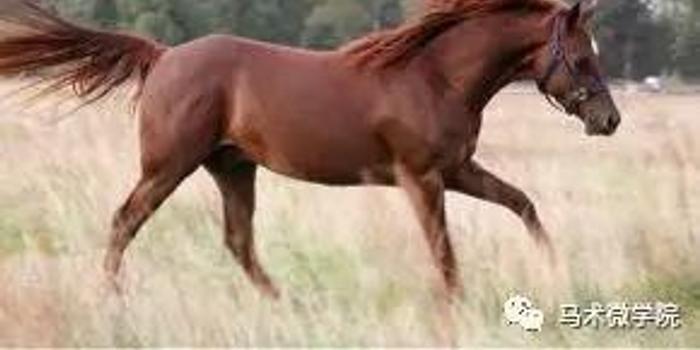 部分难以区分的马匹毛色!你分的清嘛?